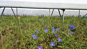 Цветки в электрической станции солнечной энергии Стоковое фото RF