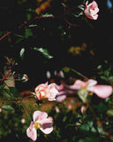 Цветки в Японии стоковое фото rf