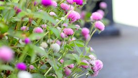Цветки в flowerbed видеоматериал