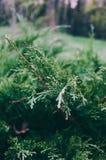 Цветки в macrophotography обрамленный зеленый горизонтально завод фото Стоковые Изображения RF