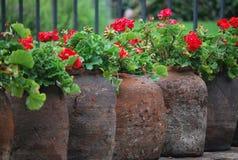 Цветки в parc в Мексике Стоковое Изображение