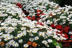 Цветки в Tintagel в Корнуолле стоковые фотографии rf