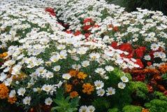 Цветки в Tintagel в Корнуолле стоковое фото rf