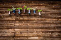 Цветки в wellies Стоковые Изображения