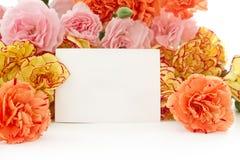 Цветки гвоздики Стоковое Изображение