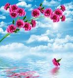 Цветки гвоздики ветви Стоковое фото RF