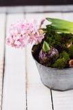 Цветки гиацинта, мха и шарика Стоковые Фото