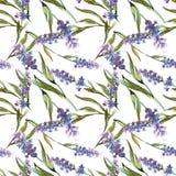 Цветки голубой фиолетовой лаванды флористические ботанические r r иллюстрация штока