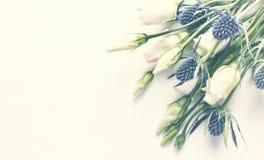 Цветки горечавки прерии и падуба моря на предпосылке белой бумаги для приглашений или поздравительных открыток Стоковое Фото