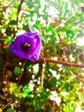Цветки гороха Стоковые Фотографии RF