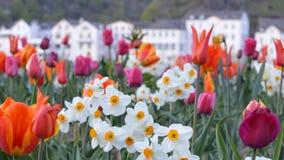 Цветки городком Стоковое Фото