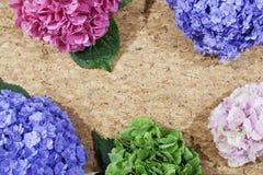 Цветки гортензий на таблице Стоковые Изображения