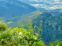 Цветки горы и трава на краю ущелья Стоковое фото RF
