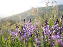 Цветки горы стоковые изображения