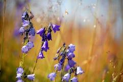 Цветки горы стоковые изображения rf