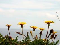 Цветки горы Стоковые Фото