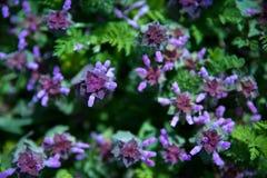 Цветки горы Стоковое Фото