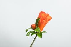 Цветки гранатового дерева Стоковые Изображения