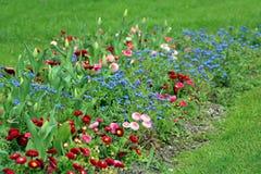 Цветки границы весеннего времени Стоковое фото RF