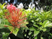 Цветки группы в парке Стоковое Фото