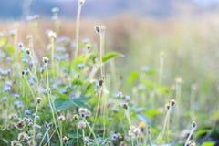 Цветки для обоев и предпосылки Стоковые Фотографии RF