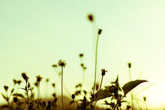 Цветки для обоев и предпосылки Стоковое фото RF