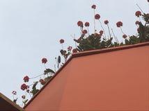 Цветки достигая для неба стоковые изображения