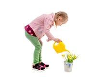 Цветки девушки моча, изолированные на белой предпосылке Стоковая Фотография RF