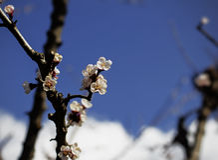 Цветки дерева против голубого неба Стоковое фото RF