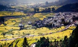 цветки деревни и рапса Стоковое Изображение RF