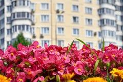 Цветки лета в большом городе Стоковая Фотография