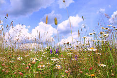 Цветки лета красочные на предпосылке голубого неба Стоковое Изображение