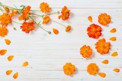цветки лета на белом деревянном backgrond Стоковые Изображения
