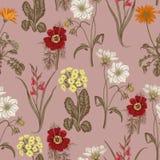 Цветки лета поля Безшовная предпосылка ботаническую Ткань, обои кровопролитное флористическая текстура картины иллюстрация вектора