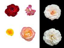 Цветки лета при цветники отделенные на предпосылке Стоковое Изображение RF