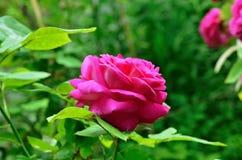 Цветки лета яркие день солнечный Стоковая Фотография