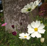 Цветки лета Стоковое фото RF