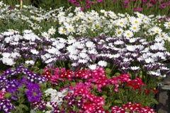 Цветки лета Стоковые Фотографии RF