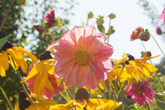 Цветки лета Стоковое Изображение
