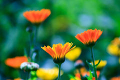 Цветки лета Стоковая Фотография RF