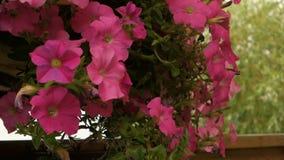 Цветки летнего времени видеоматериал