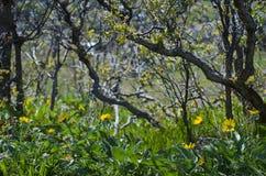 Цветки желтого цвета на поле леса Стоковые Фотографии RF