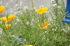 Цветки желтый цвет и белизны Стоковое фото RF