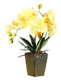Цветки желтой орхидеи Стоковая Фотография