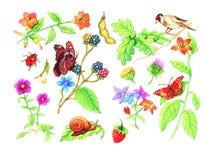 цветки животных Стоковая Фотография RF