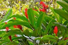 Цветки джунглей Стоковое Фото