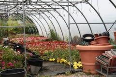 Цветки, заводы и вазы Стоковая Фотография RF