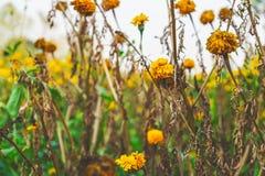 Цветки завяли с течением времени и предпосылка цветков стоковая фотография