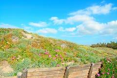 цветки загородки Стоковое Фото