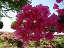 Цветки закрывают вверх Стоковое фото RF